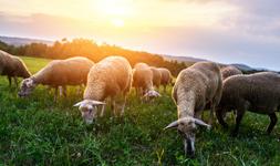 Pets Livestock Industry