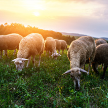 Pets and Livestock